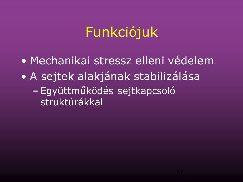 Funkciójuk Mechanikai stressz elleni védelem