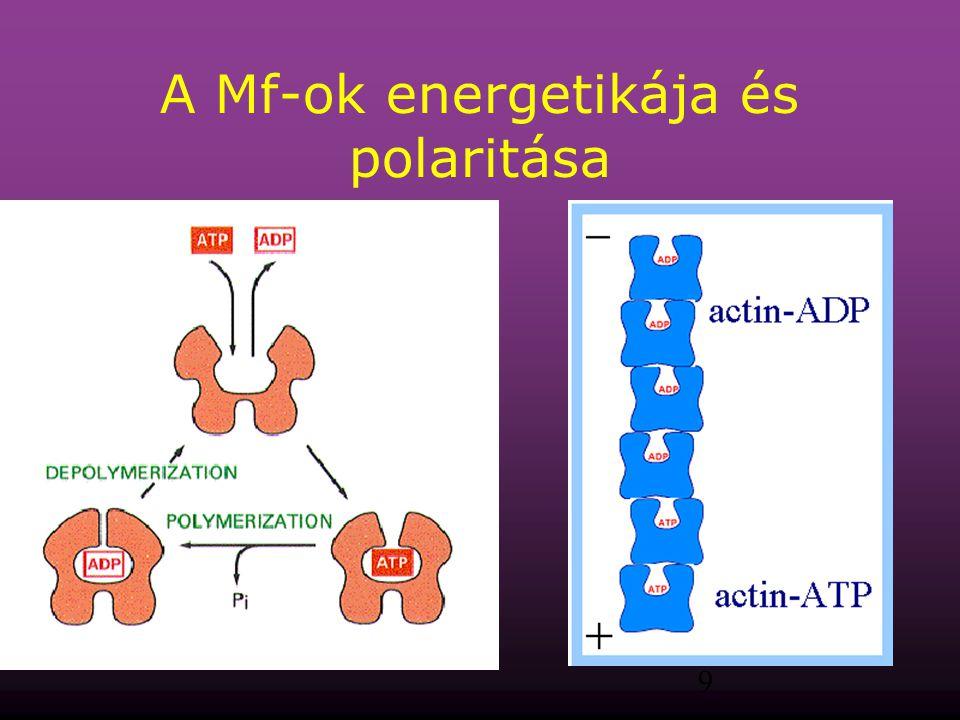 A Mf-ok energetikája és polaritása