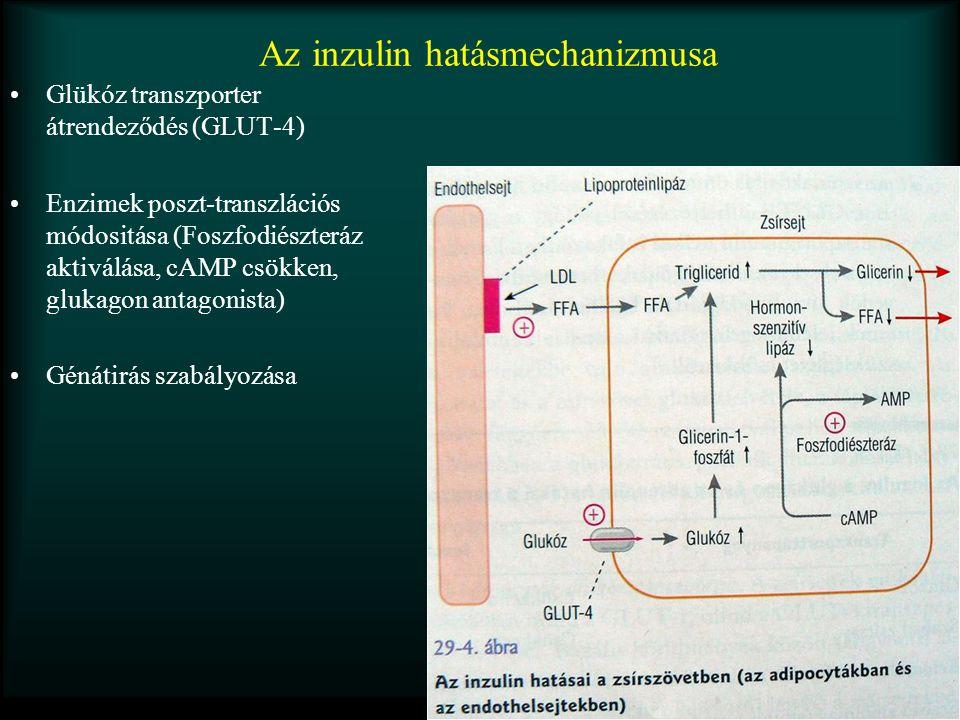 Az inzulin hatásmechanizmusa