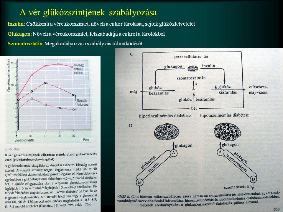 A vér glükózszintjének szabályozása