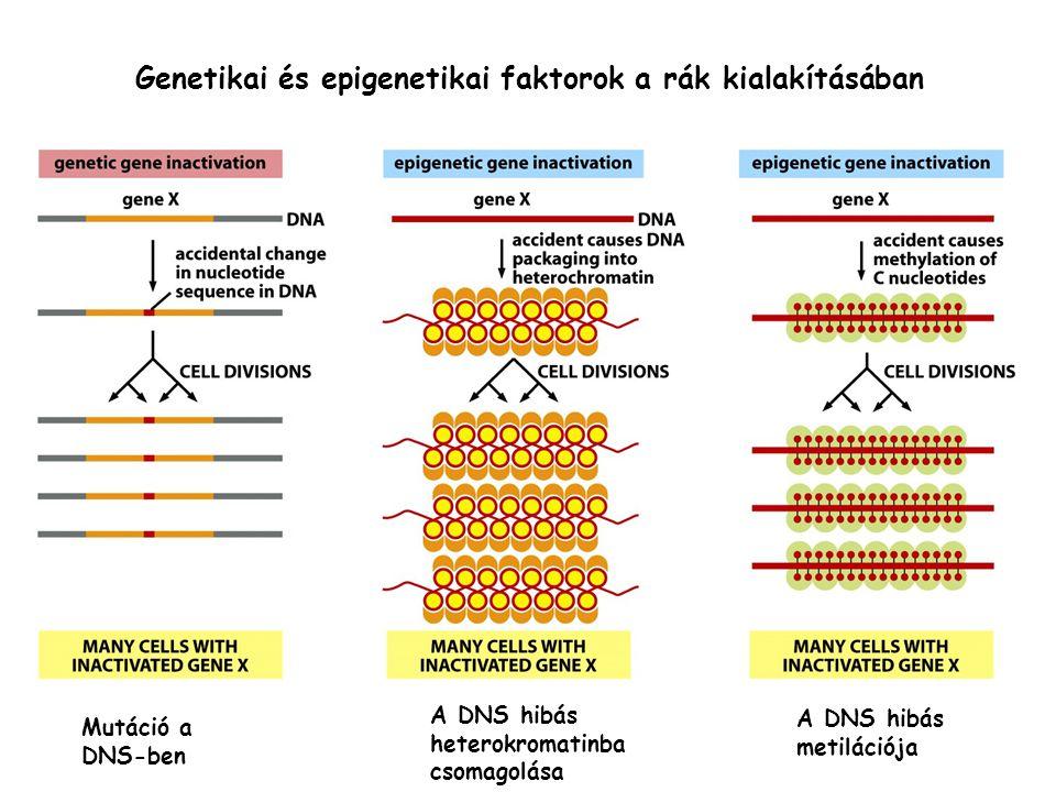 Genetikai és epigenetikai faktorok a rák kialakításában