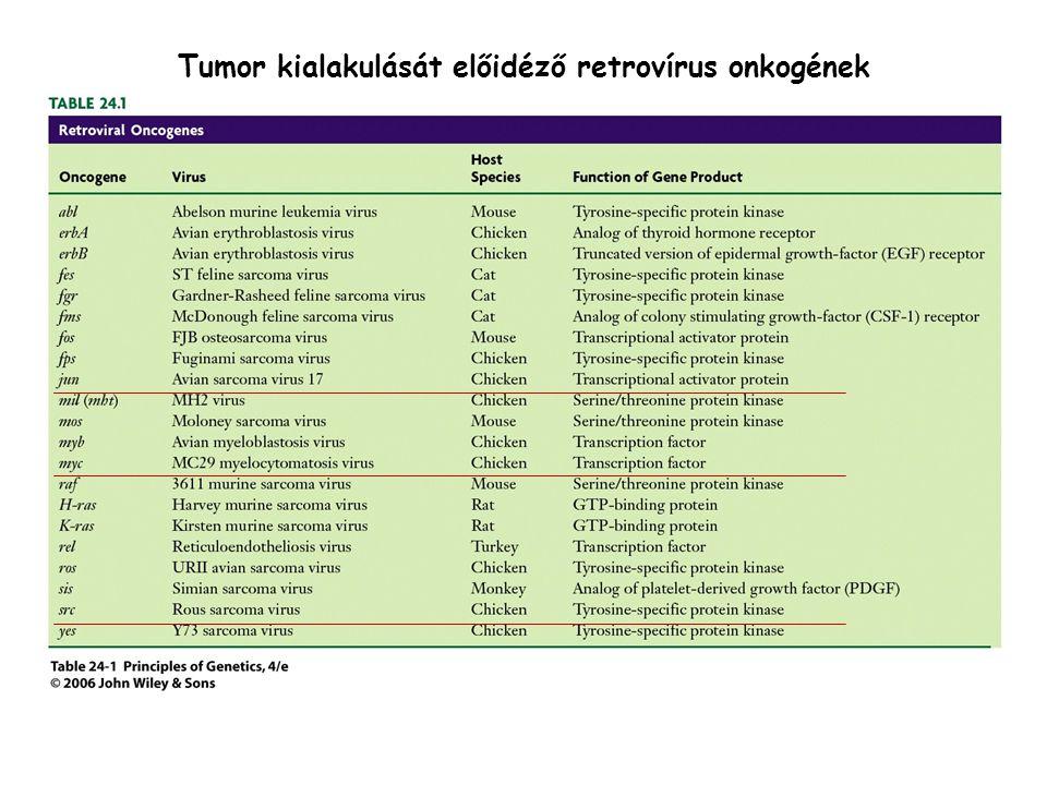 Tumor kialakulását előidéző retrovírus onkogének