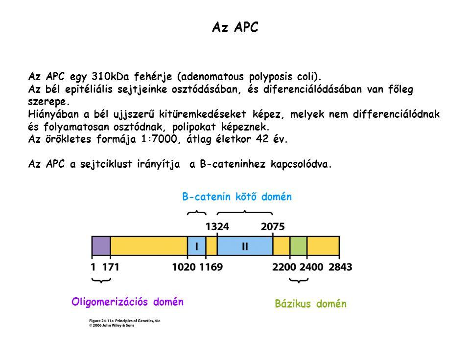 Oligomerizációs domén