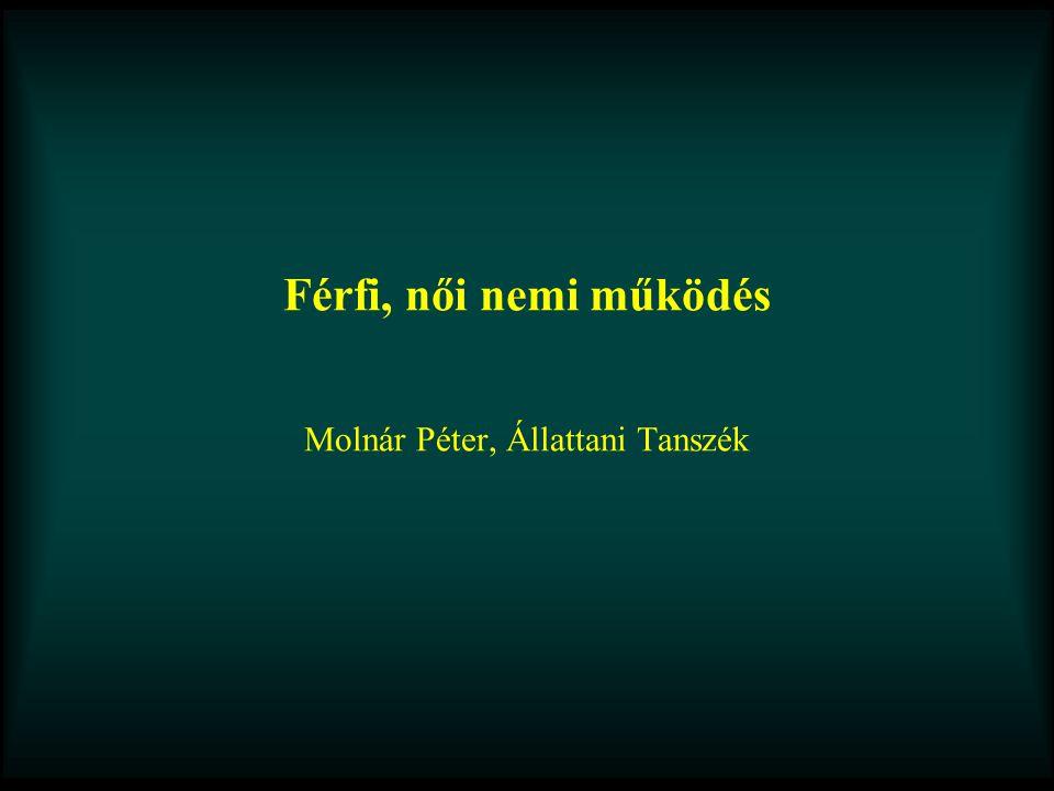 Férfi, női nemi működés Molnár Péter, Állattani Tanszék