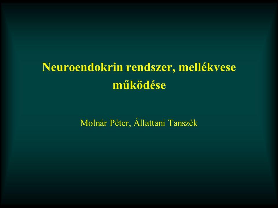 Neuroendokrin rendszer, mellékvese működése Molnár Péter, Állattani Tanszék