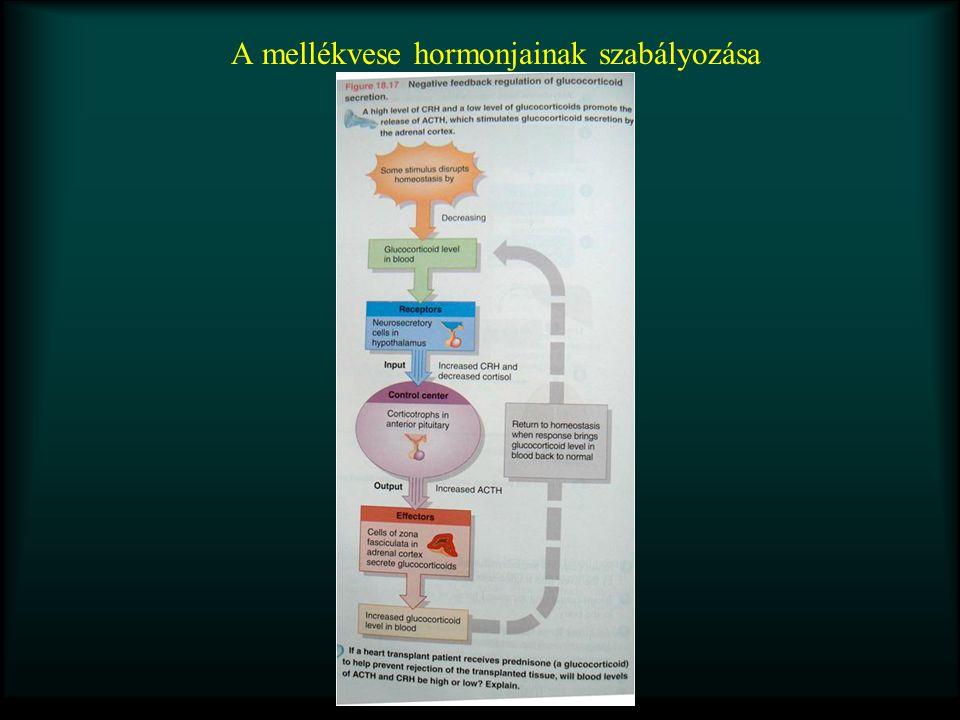 A mellékvese hormonjainak szabályozása