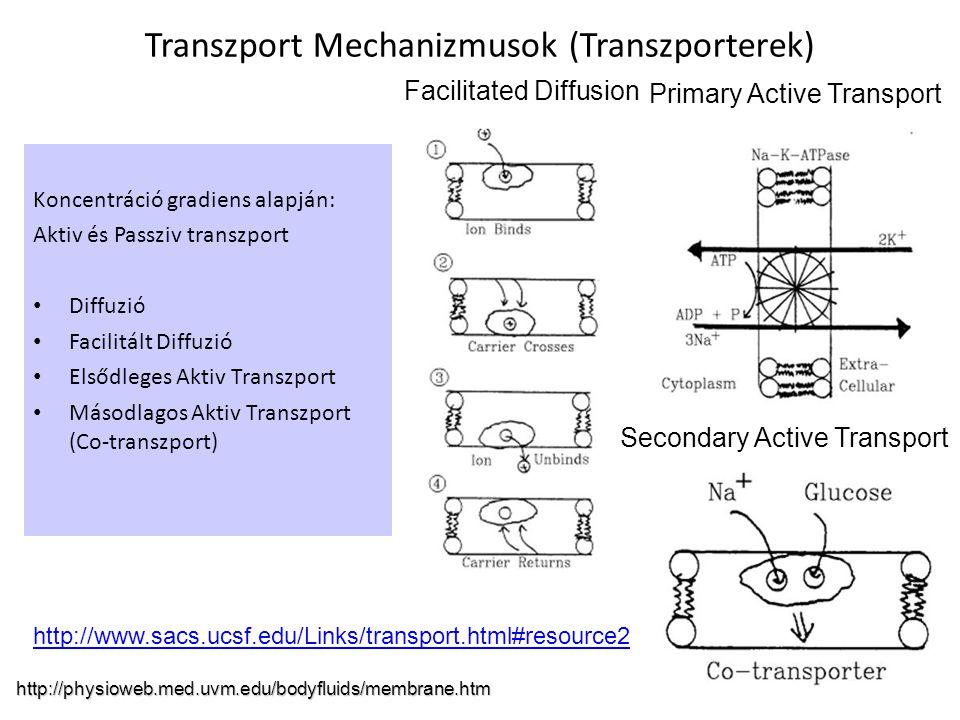 Transzport Mechanizmusok (Transzporterek)