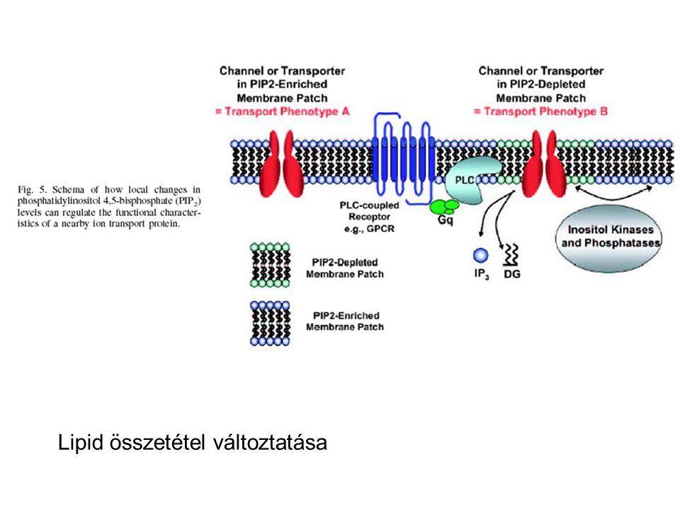Lipid összetétel változtatása