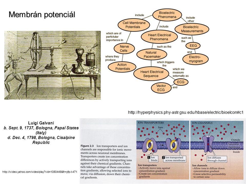 Membrán potenciál http://hyperphysics.phy-astr.gsu.edu/hbase/electric/bioelcon#c1.