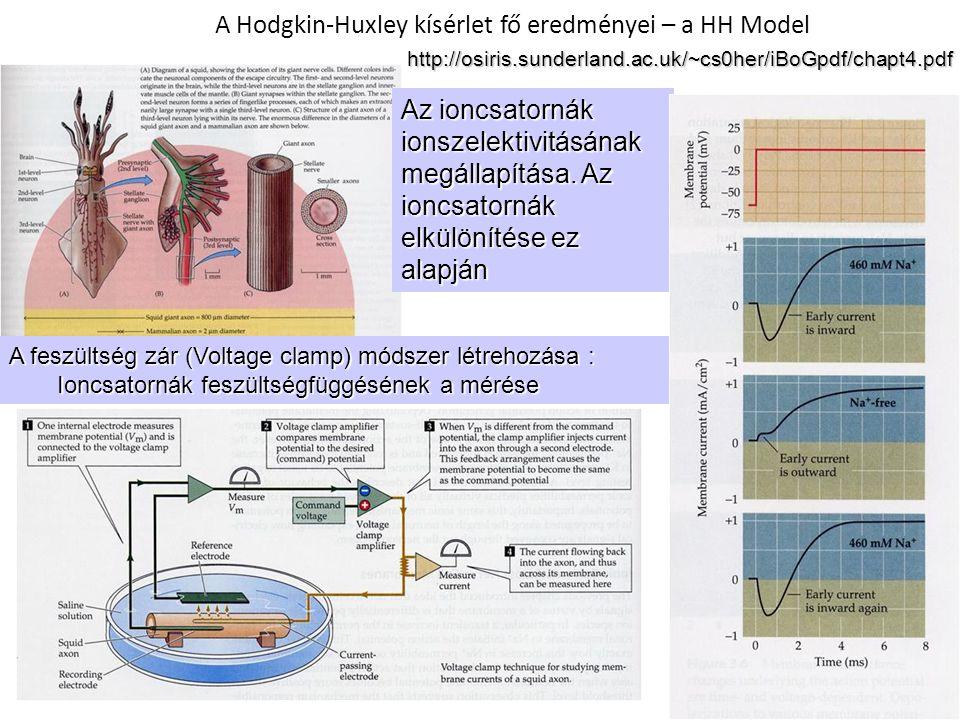 A Hodgkin-Huxley kísérlet fő eredményei – a HH Model