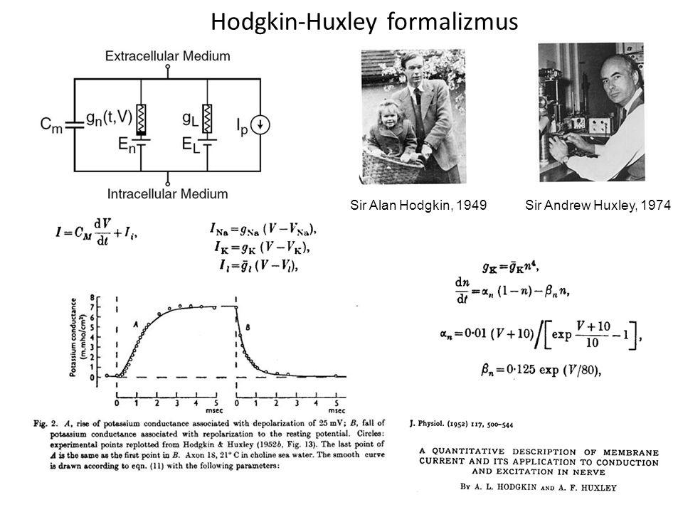 Hodgkin-Huxley formalizmus