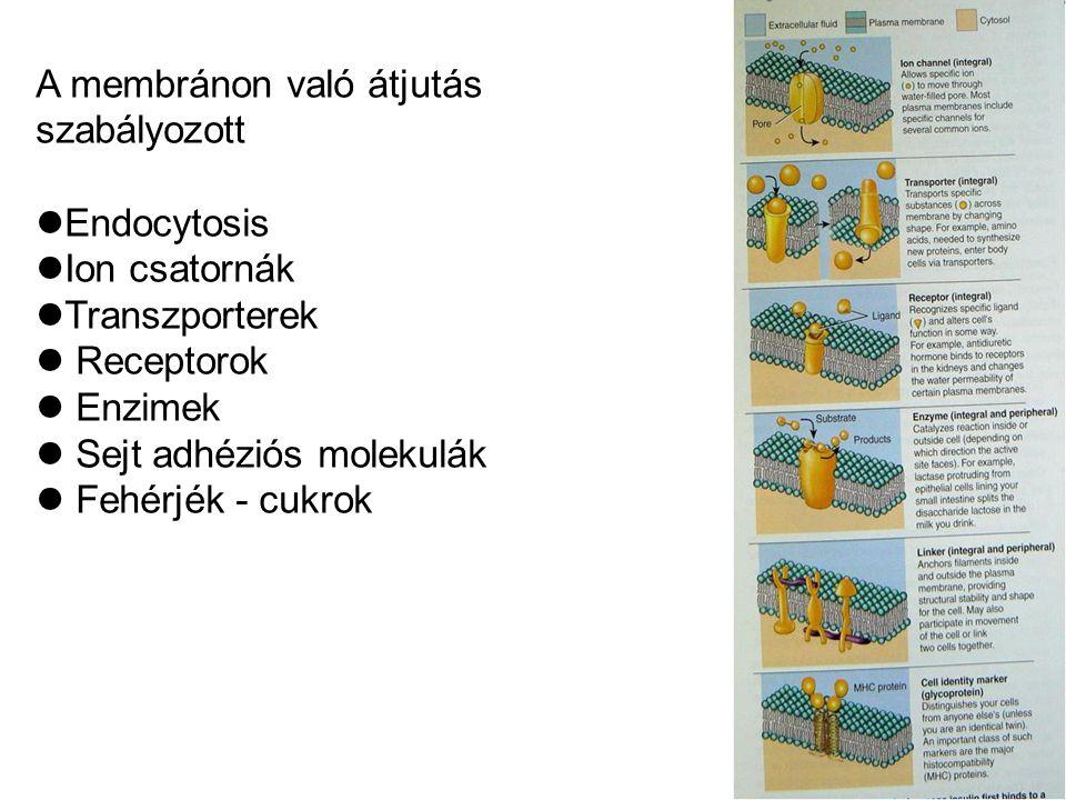 A membránon való átjutás szabályozott