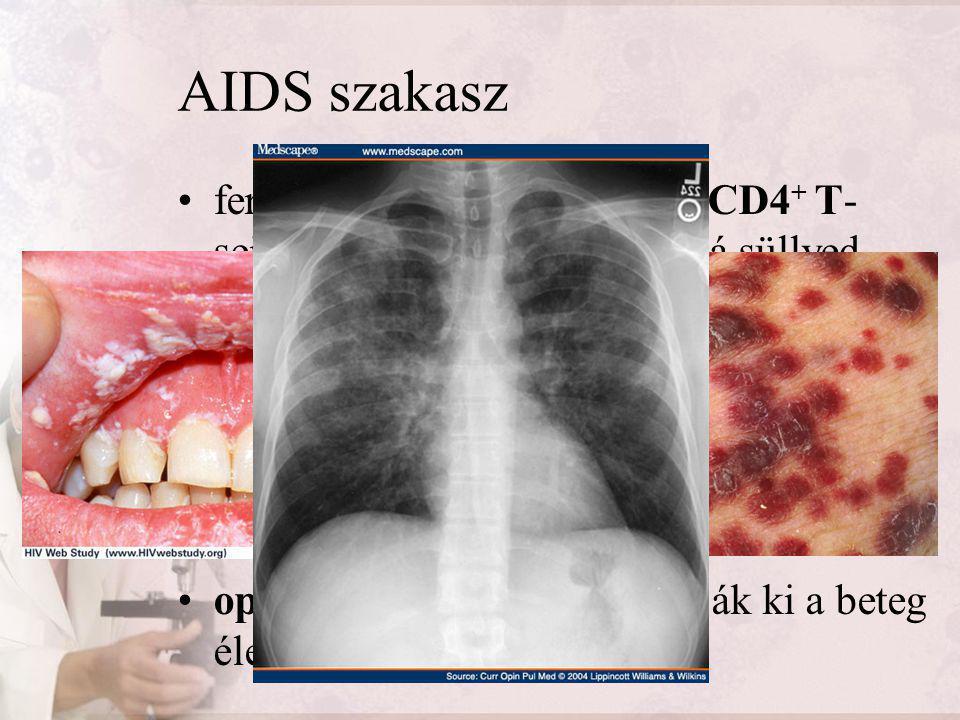 AIDS szakasz fertőződés után 8-12 évvel a CD4+ T-sejtek száma kritikus érték alá süllyed. nem képes a szervezet kialakítani az immunválaszt.