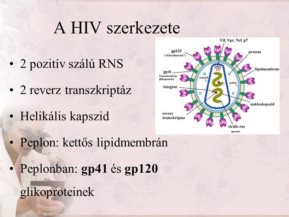 A HIV szerkezete 2 pozitív szálú RNS 2 reverz transzkriptáz