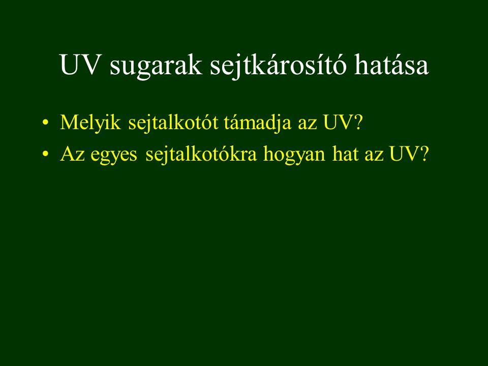 UV sugarak sejtkárosító hatása