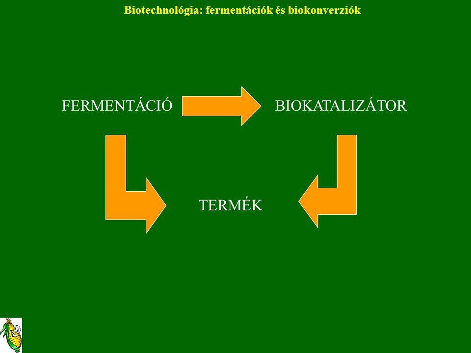 Biotechnológia: fermentációk és biokonverziók