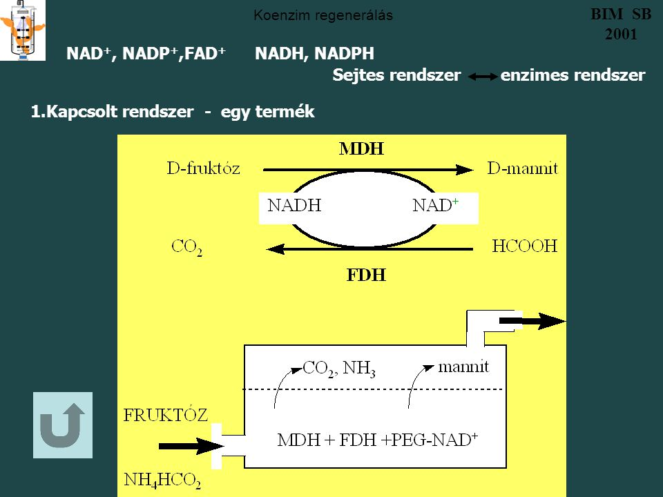 Sejtes rendszer enzimes rendszer