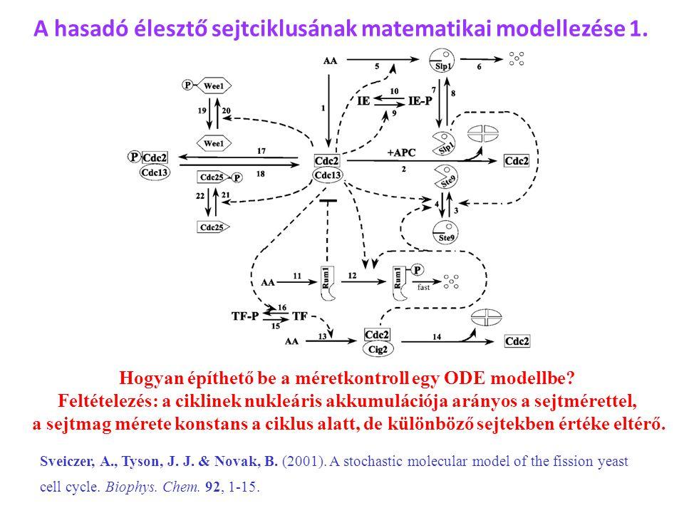 Hogyan építhető be a méretkontroll egy ODE modellbe