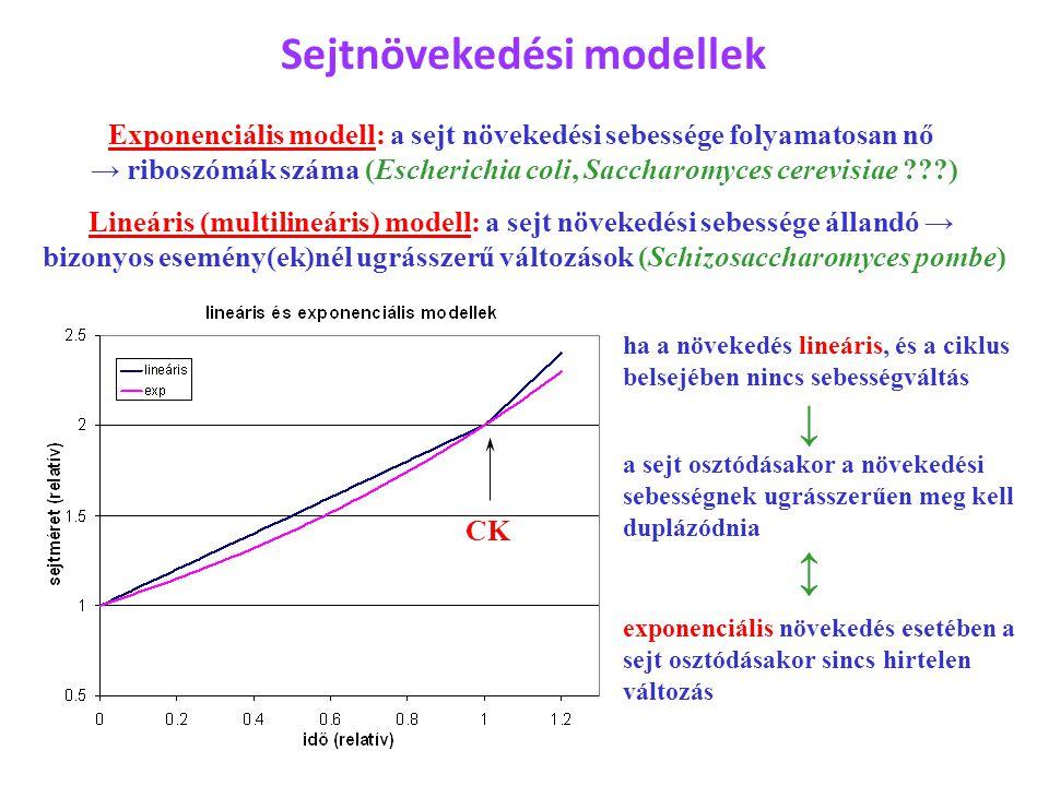 Sejtnövekedési modellek