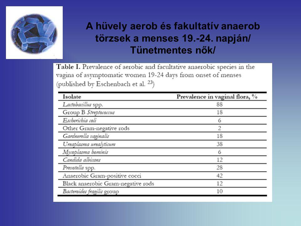A hüvely aerob és fakultatív anaerob törzsek a menses 19. -24