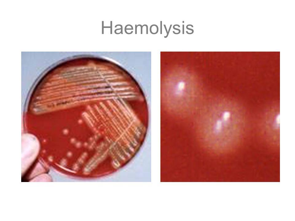 Haemolysis