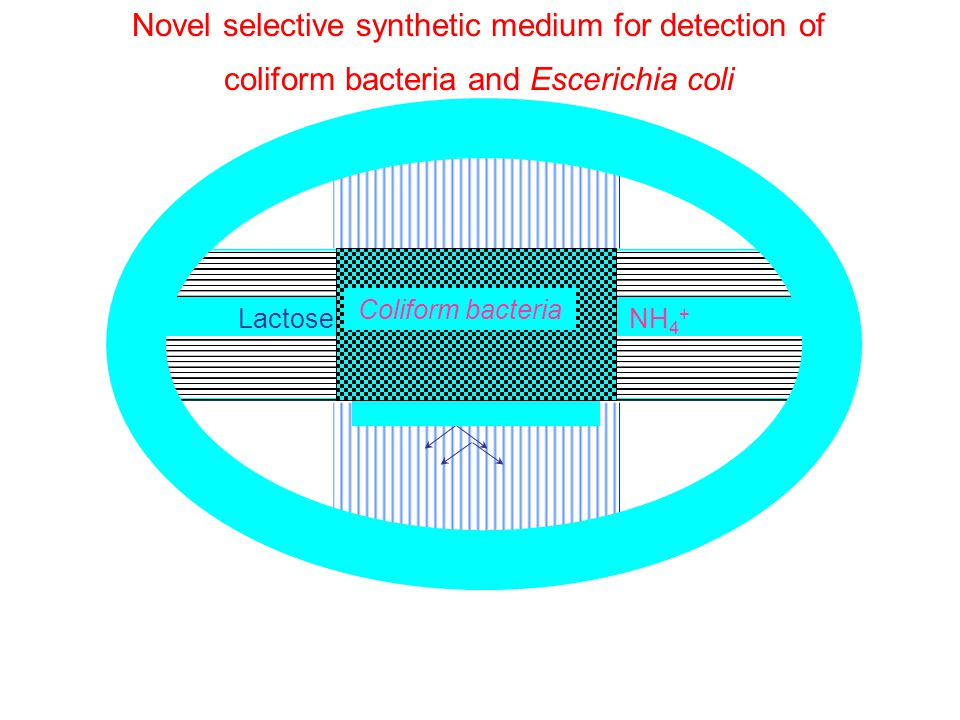 Novel selective synthetic medium for detection of coliform bacteria and Escerichia coli