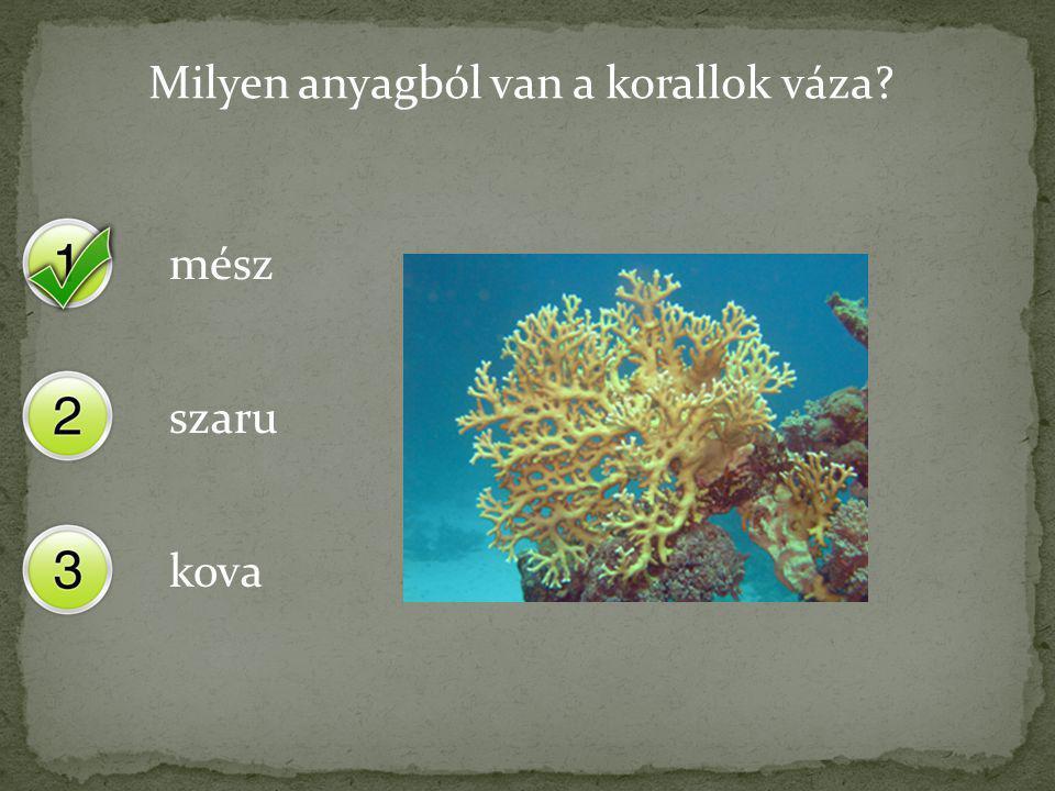 Milyen anyagból van a korallok váza