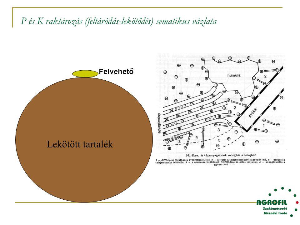P és K raktározás (feltáródás-lekötődés) sematikus vázlata