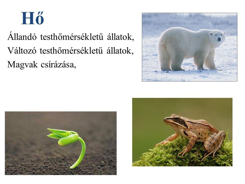 Hő Állandó testhőmérsékletű állatok, Változó testhőmérsékletű állatok,
