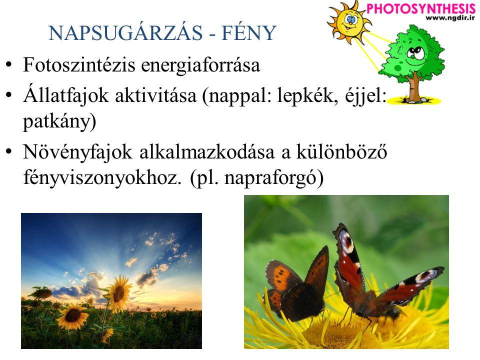 NAPSUGÁRZÁS - FÉNY Fotoszintézis energiaforrása. Állatfajok aktivitása (nappal: lepkék, éjjel: patkány)