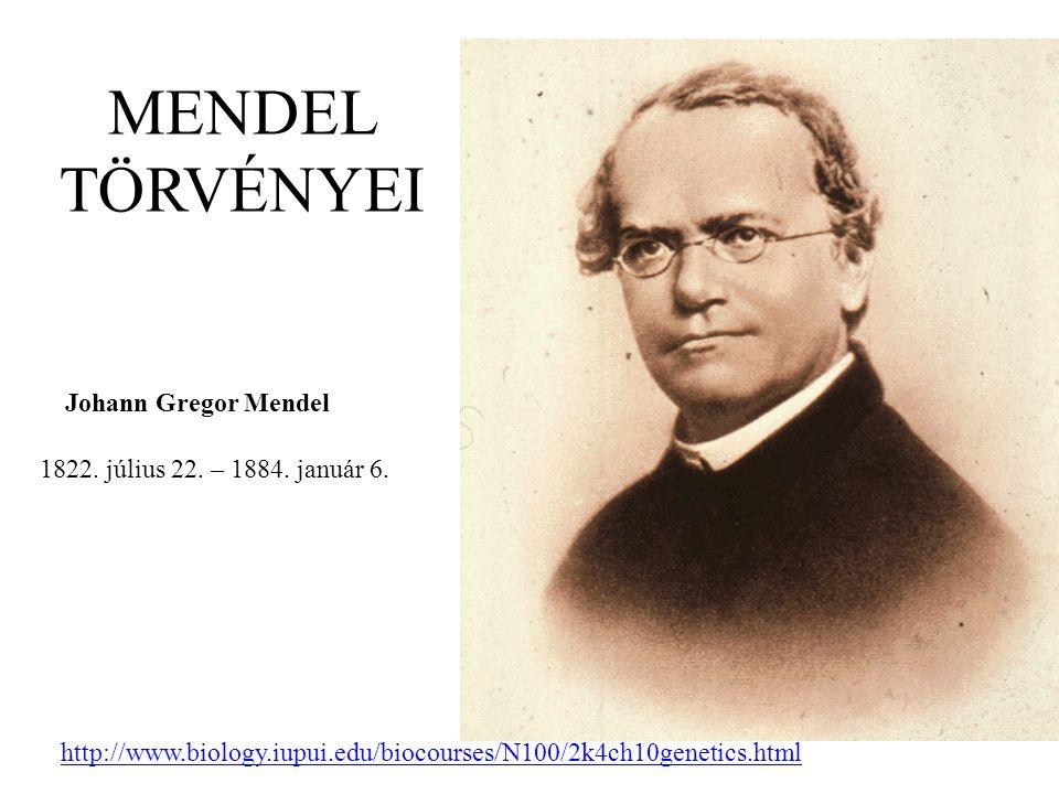 MENDEL TÖRVÉNYEI Johann Gregor Mendel