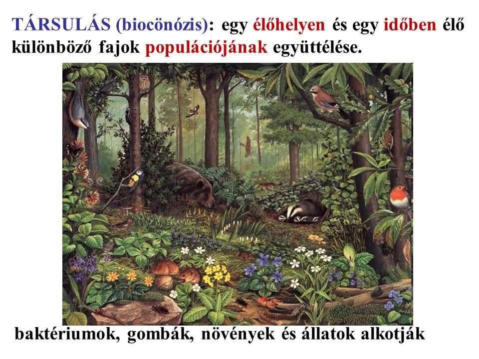 TÁRSULÁS (biocönózis): egy élőhelyen és egy időben élő