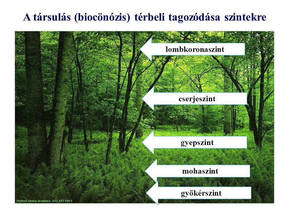 A társulás (biocönózis) térbeli tagozódása szintekre