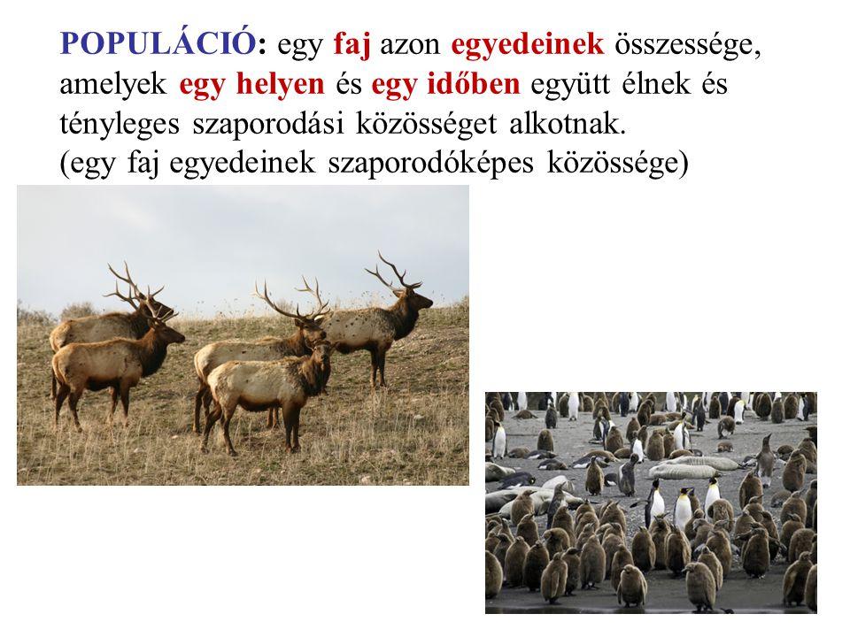 POPULÁCIÓ: egy faj azon egyedeinek összessége,