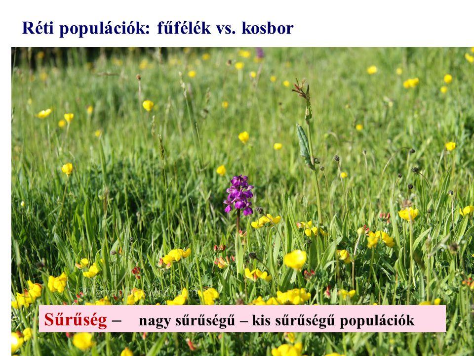 Réti populációk: fűfélék vs. kosbor