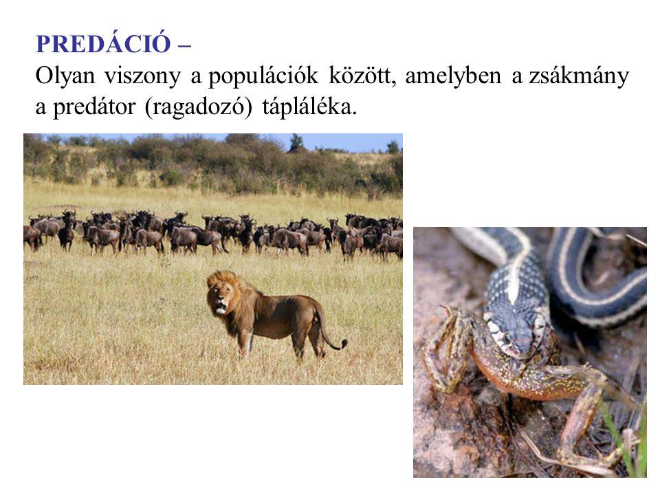 PREDÁCIÓ – Olyan viszony a populációk között, amelyben a zsákmány a predátor (ragadozó) tápláléka.