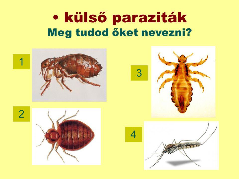 külső paraziták Meg tudod őket nevezni