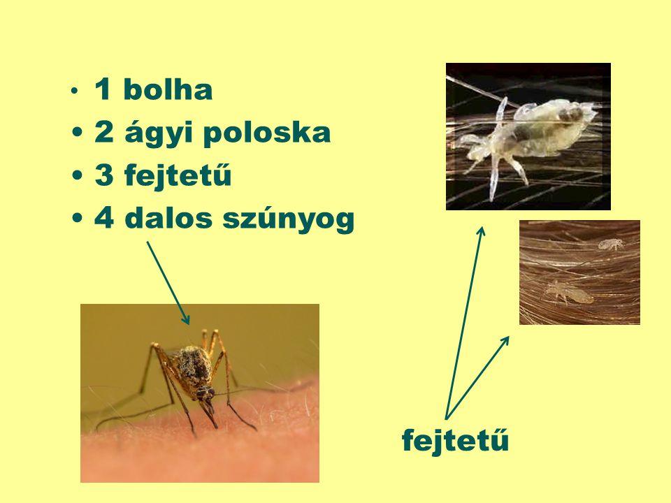 1 bolha 2 ágyi poloska 3 fejtetű 4 dalos szúnyog fejtetű