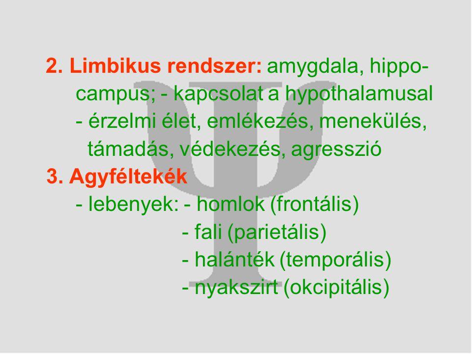 2. Limbikus rendszer: amygdala, hippo-