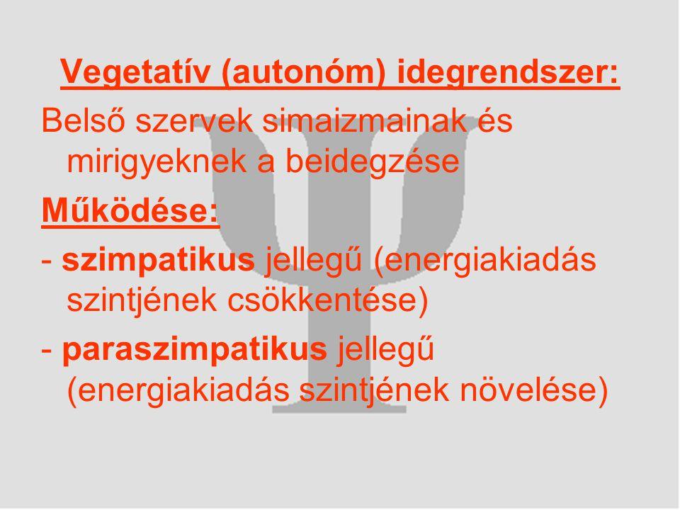 Vegetatív (autonóm) idegrendszer: