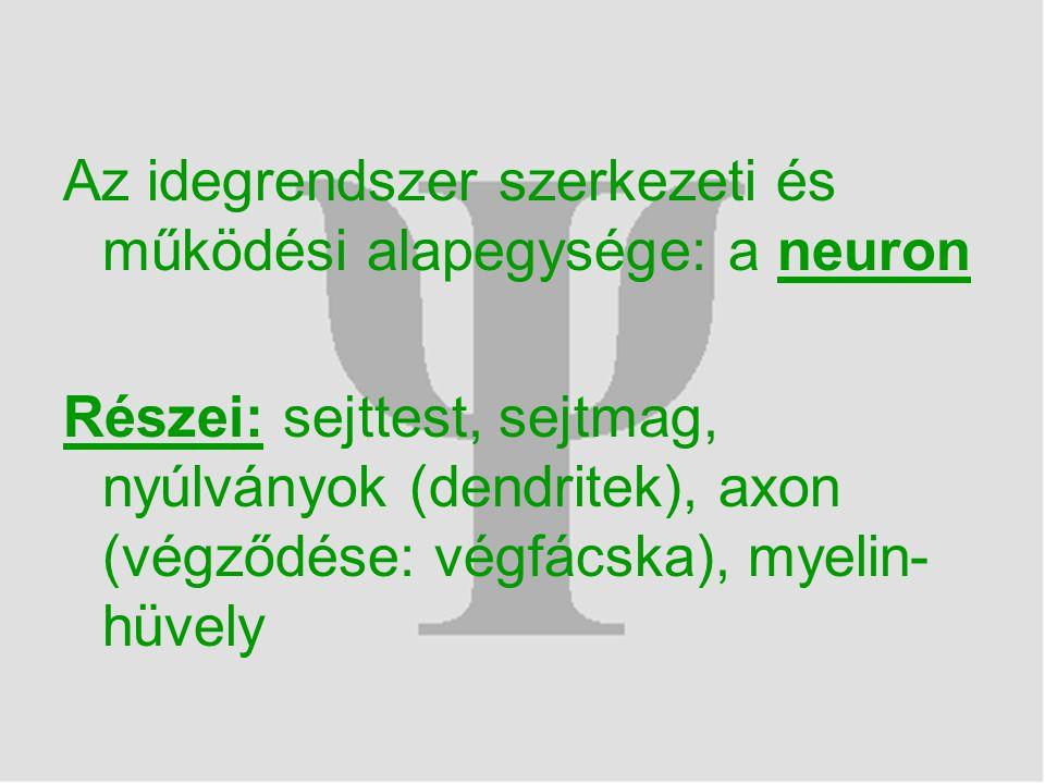 Az idegrendszer szerkezeti és működési alapegysége: a neuron