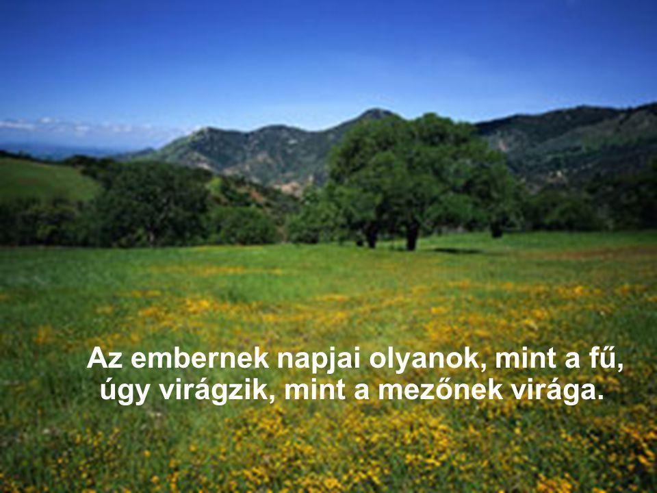 Az embernek napjai olyanok, mint a fű, úgy virágzik, mint a mezőnek virága.