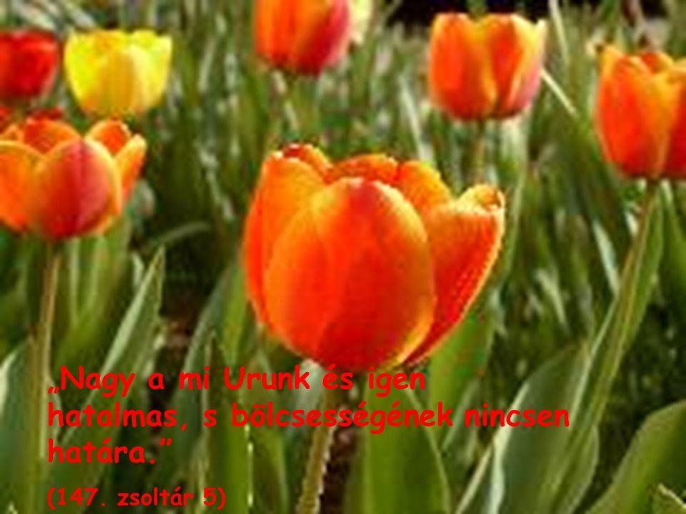 """""""Nagy a mi Urunk és igen hatalmas, s bölcsességének nincsen határa."""