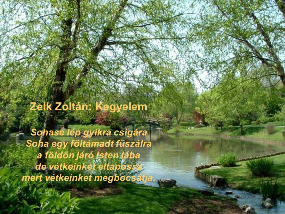 Zelk Zoltán: Kegyelem
