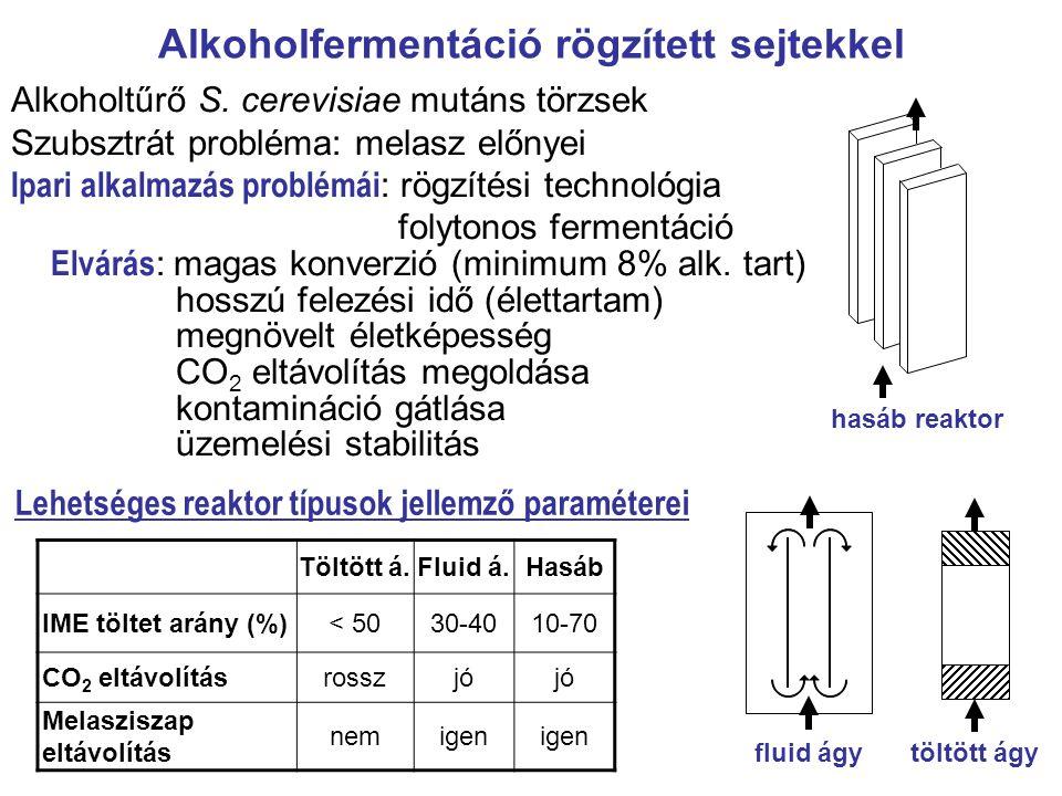 Alkoholfermentáció rögzített sejtekkel
