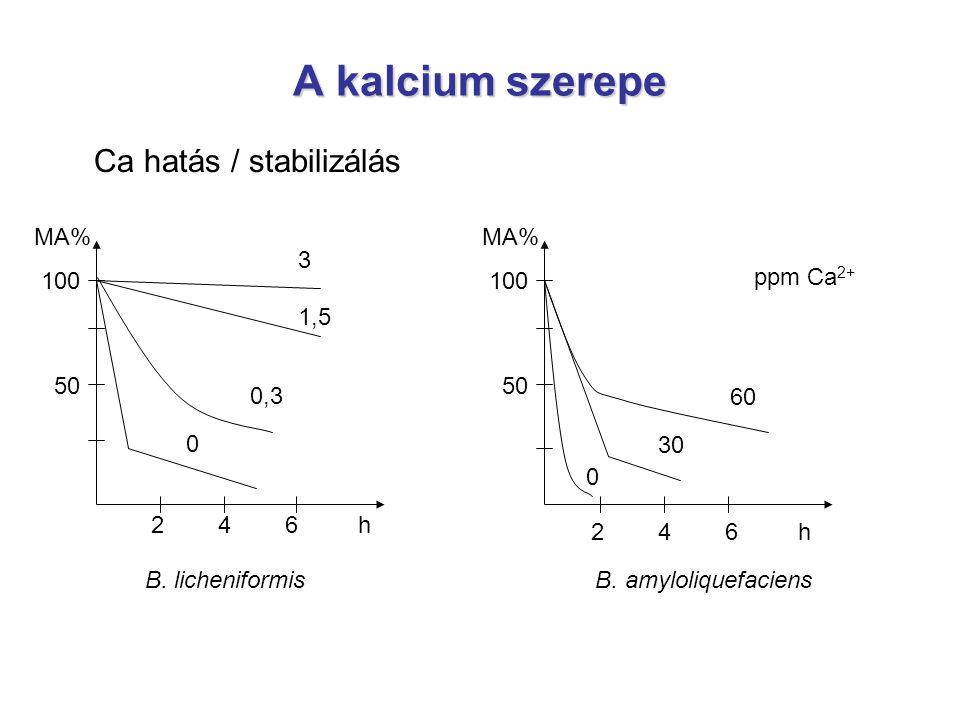 A kalcium szerepe Ca hatás / stabilizálás MA% 100 50 MA% 100 50 3