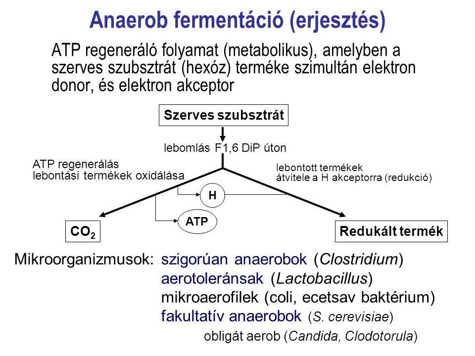 Anaerob fermentáció (erjesztés)