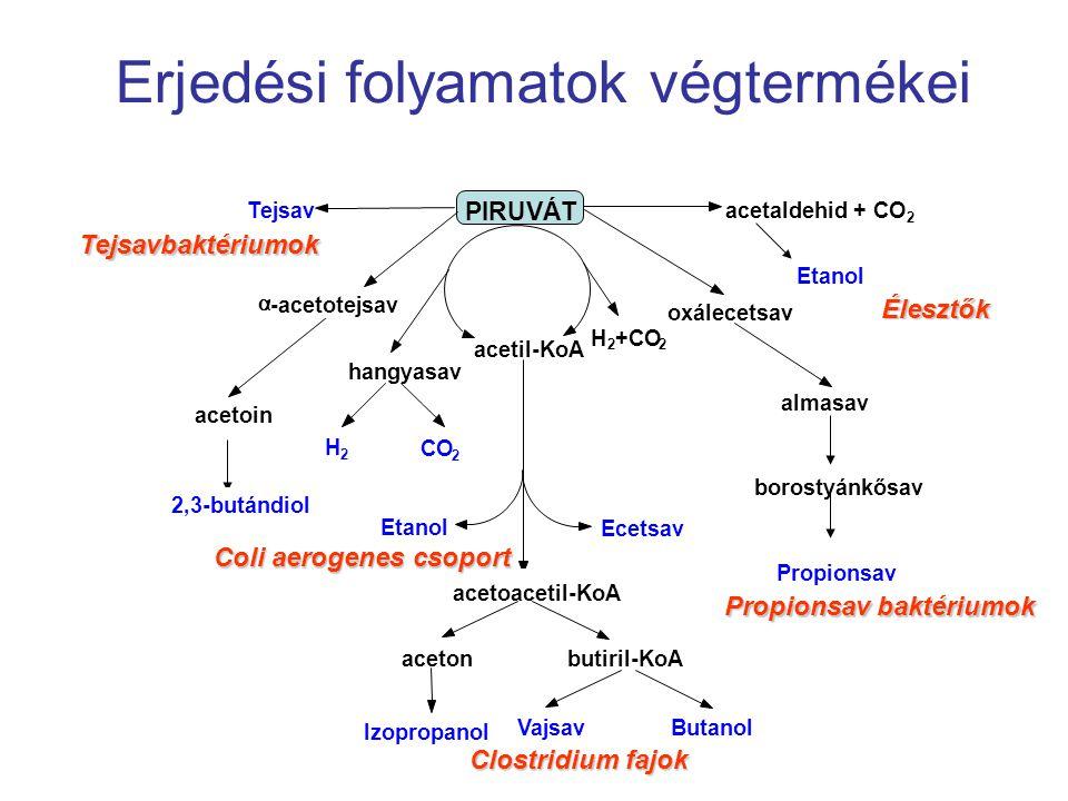 Erjedési folyamatok végtermékei
