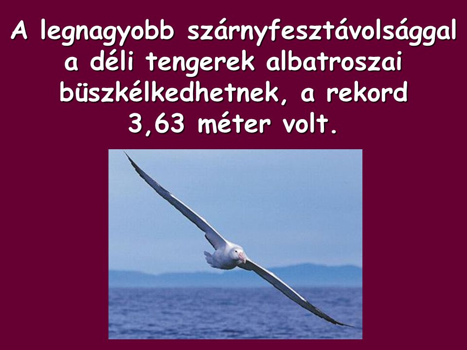 A legnagyobb szárnyfesztávolsággal a déli tengerek albatroszai büszkélkedhetnek, a rekord 3,63 méter volt.