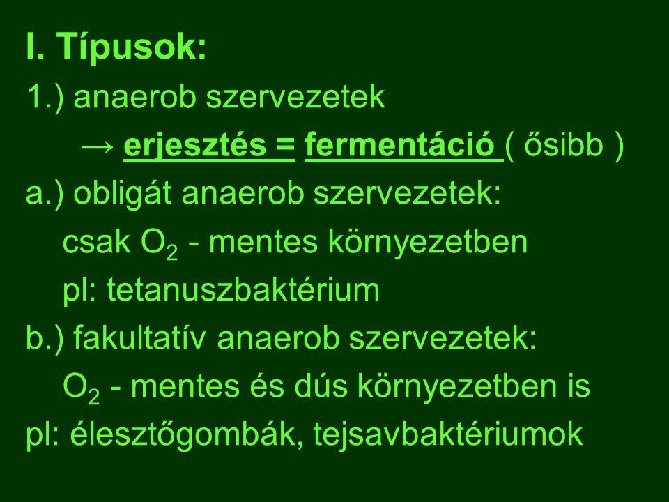I. Típusok: 1.) anaerob szervezetek